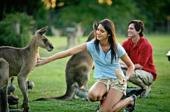 新西兰留学 这4大留学效果你知道吗?