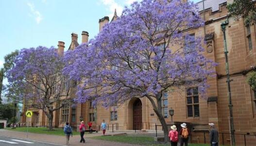 澳高校或限制招生数量 上大学更难更贵