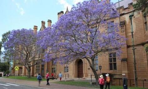 澳洲国际教育面临挑战 签证改革影响留学吸引力