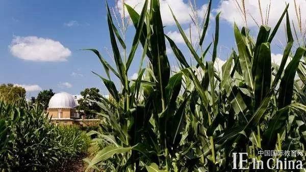 身处奇葩地区的美国名校之玉米地大学