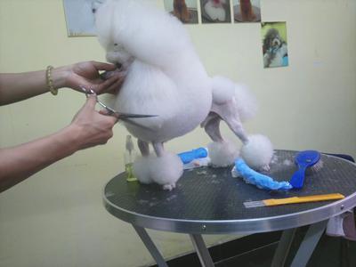 禁止对宠物动刀! 拥有绝对权力的加拿大兽医专业