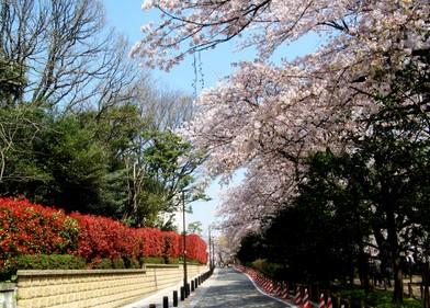 日本留学生需要避免误区介绍