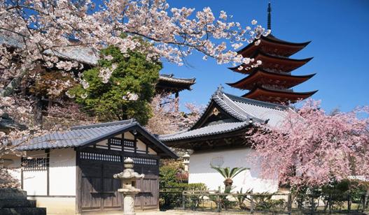 哪些人群适合去日本留学