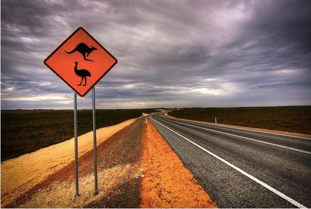 澳洲留学党注意了:车祸猛如虎 在澳驾车需谨慎