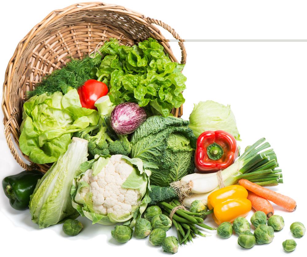 学食品科学专业 到新西兰
