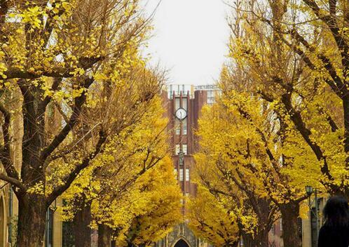 想要申请东京大学本科 快来看看吧
