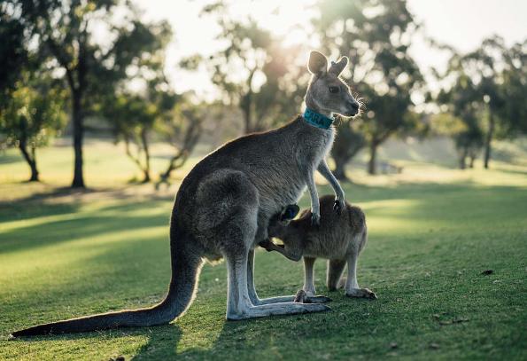 解析:澳洲名校对高考直升要求
